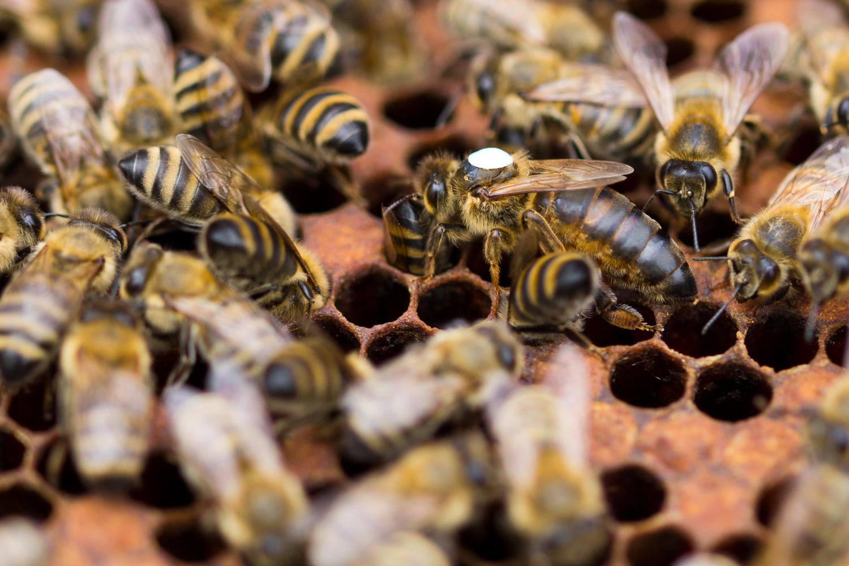 Bienen-14