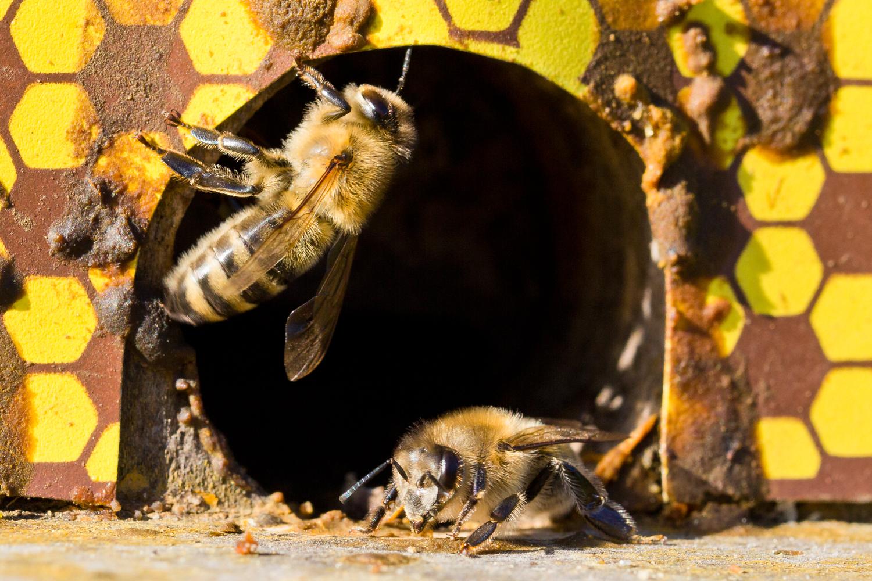 Bienen-2