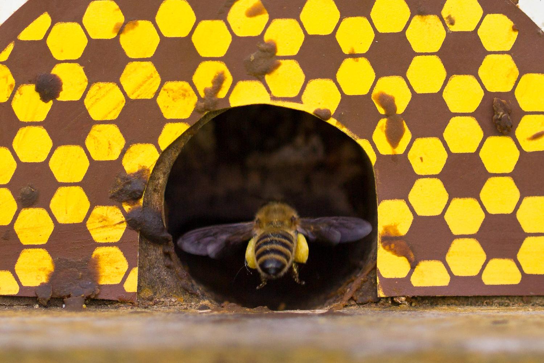 Bienen-9