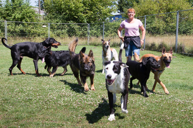 Martina und die Hunde