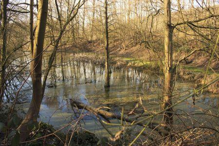 Schwarzbachquelle in einem Teich am Hallo-Park