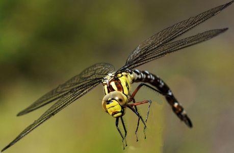 Libelle auf Zeche Zollverein