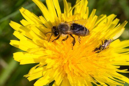 Bienen-8
